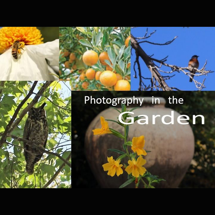 Day of Wonder: Photography in the Garden